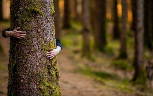 wooden ecologic